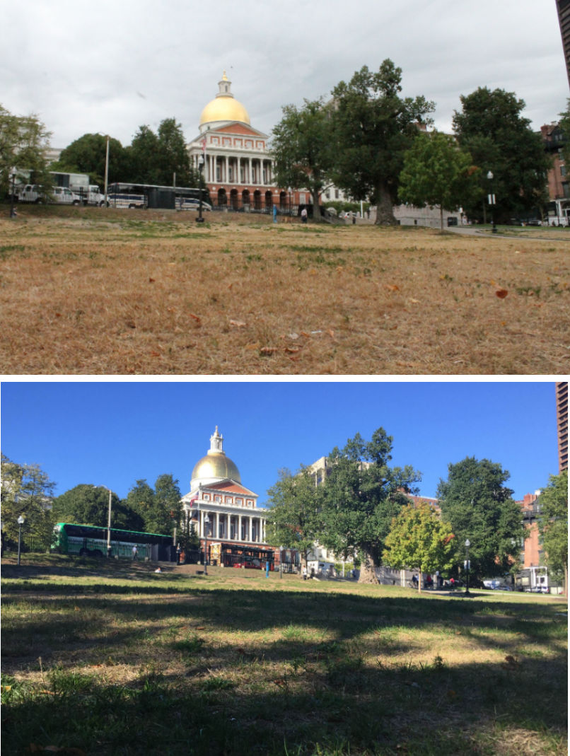 Green patches have begun to return to Boston Commo